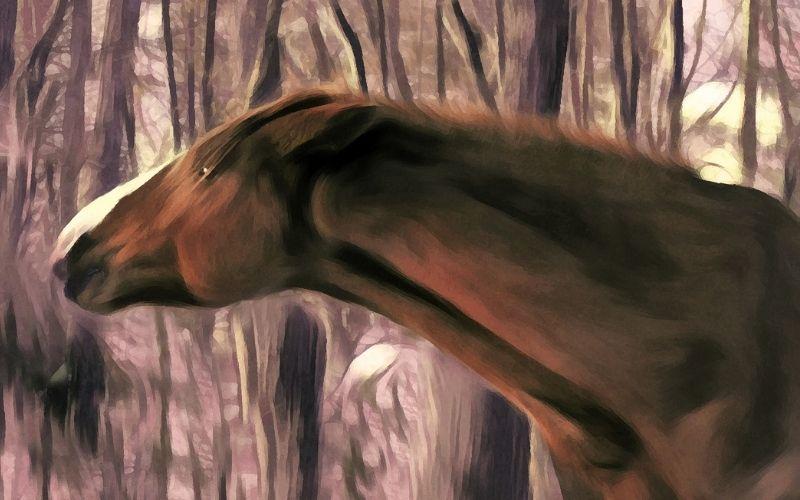 Tableaux de chevaux : Les chevaux dans l'art
